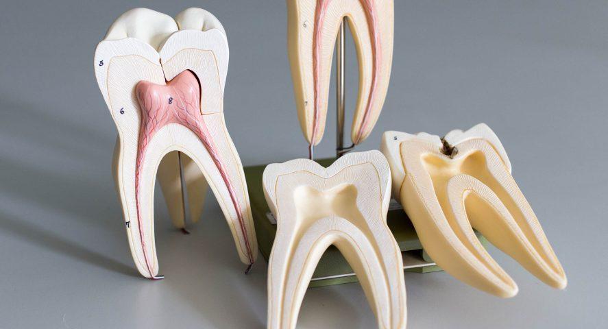 Dentist in Wichita